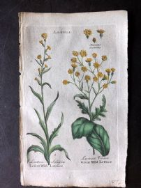 Hill & Culpeper 1792 HCol Botanical Print. Lesser & Greater Wild Lettuce